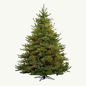 10 Balsam Fir Artificial Christmas Tree   Unlit