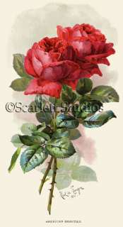 Lovely AMERICAN BEAUTY ROSES by Paul DeLongpre CANVAS