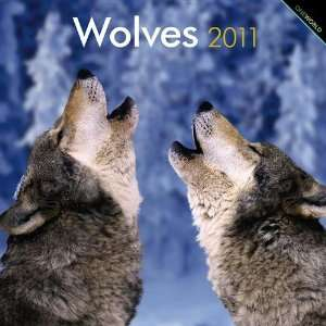 2011 Animal Calendars Wolves   12 Month   30x30cm